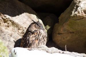 Tierfreigelände Bayerischer Wald