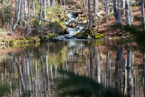 Sagwasserklause Bayerischer Wald
