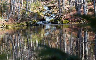 Zur Sagwasserklause im Nationalpark Bayerischer Wald