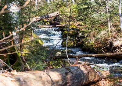 Wandern in der Sagwasserklause Bayerischer Wald
