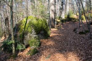 Sagwasserklause Bayerischer Wald Wandern