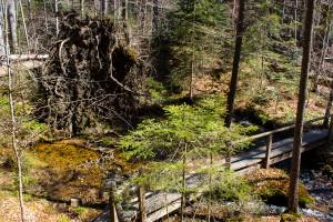 Wandern Seelensteig Bayerischer Wald Nationalpark