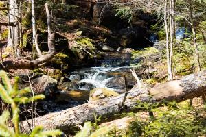 Seelensteig Nationalpark Bayerischer Wald