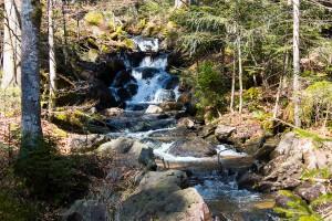 Wandern Bayerischer Wald Seelensteig