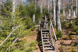 Wandern Seelensteig Bayerischer Wald