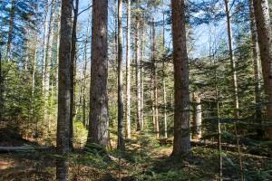 Wandern auf dem Seelensteig im Bayerischen Wald