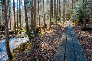 Auf dem Seelensteig im Bayerischen Wald