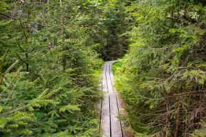 Wandern Aufichtenwaldsteg Bayersicher Wald