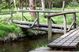 Aufichtenwaldsteg Wandern Nationalpark Bayerischer Wald