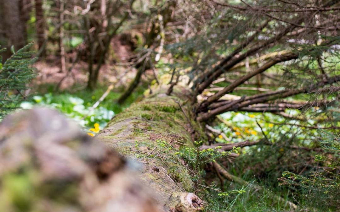 Aufichtenwaldsteg im Nationalpark Bayerischer Wald