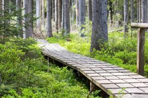 Aufichtenwaldsteg Bayerischer Wald