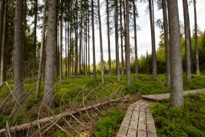 Wildnis im Nationalpark Bayerischer Wald