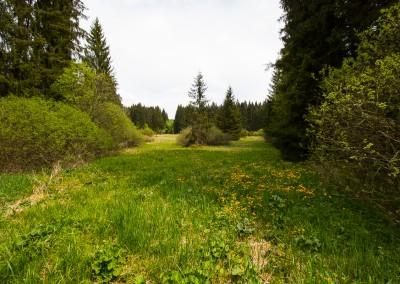 Aufichtenwaldsteg Bayerwald
