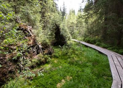 Aufichtenwaldsten Bayerischer Wald Nationalpark