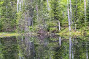 Martinsklause Nationalpark Bayerischer Wald Wandern