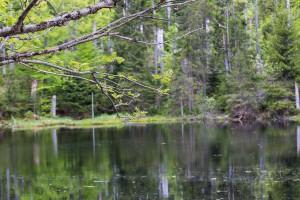 Martinsklause Bayerischer Wald