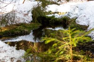 Waldhüttenbach Bayerischer Wald