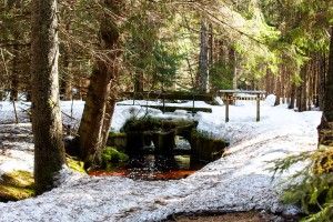 Wandern Nationalpark Bayerischer Wald Waldhüttenbach