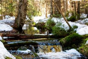 Wandern im Frühling Nationalpark Bayerischer Wald