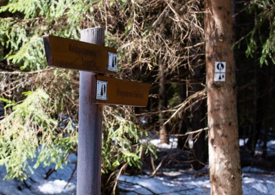 Wandern Frühling Nationalpark Bayerischer Wald