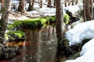Waldhüttenbach Nationalpark Bayerischer Wald Wandern