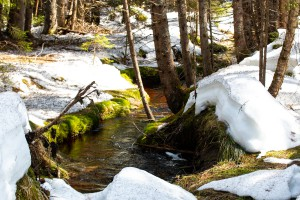 Frühlingswanderung Bayerischer Wald Nationalpark