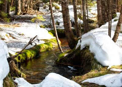 Frühlingswanderung Nationalpark Bayerischer Wald