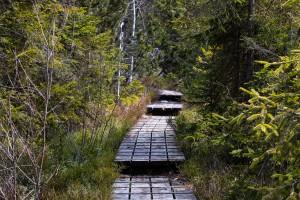 Wanderweg Bayerischer Wald