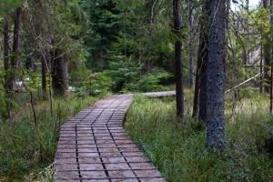 Wandern im Urwald Nationalpark Bayerischer Wald
