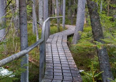 Wandern Bayerwald Nationalpark