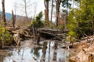 Nationalpark Bayerischer Wald Urwald Wandern