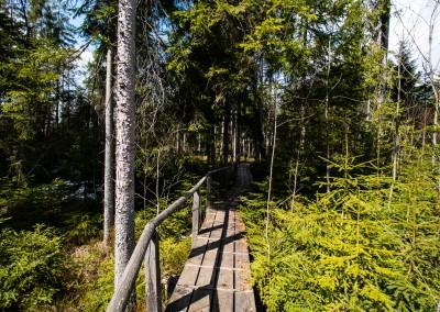 Wandern Klosterfilz Bayerischer Wald Nationalpark