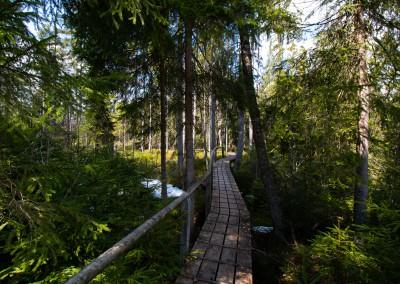 Klosterfilz Nationalpark Bayerischer Wald