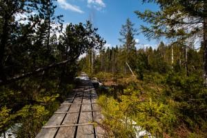 Wandern im Bayerischer Wald