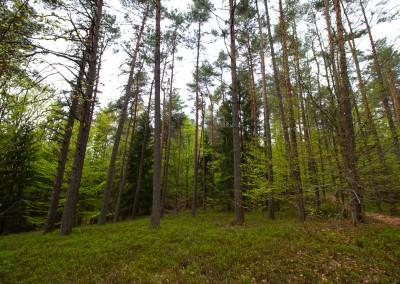 Bayerwald Wandern