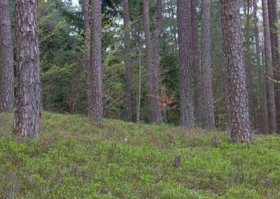 Wanderung Bayerischer Wald