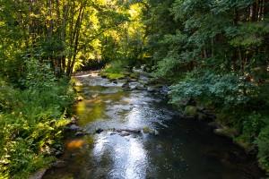 Wandern an der Mitternacher Ohe Bayerscher Wald Schönberg