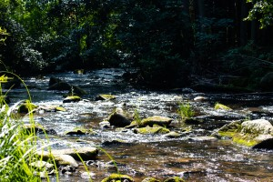 Mitternacher Ohe Bayerischer Wald Wandern
