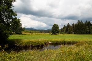Wandern Bayern Nationalpark Klosterfilz