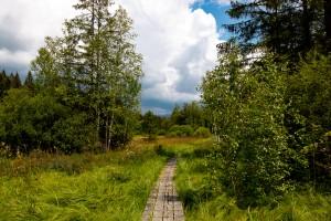 Wandern Klosterfilz Bayerischer Wald