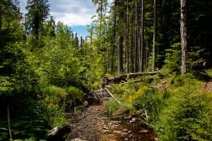 Waldwildnis im Bayerischen Wald Nationalpark