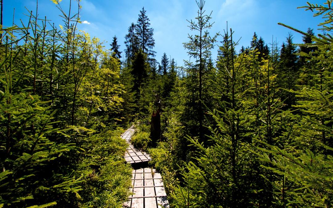 Der Aufichtenwaldsteg im Sommer