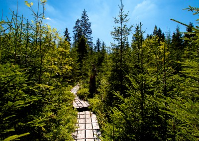 Aufichtenwaldsteg Nationalpark Bayerischer Wald
