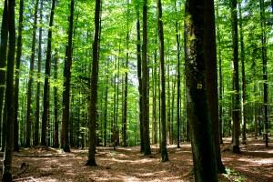 "Wanderweg ""Rehbock"" Rundweg Bayerischer Wald"