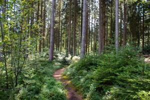 Wandern Altschönau Bayerischer Wald