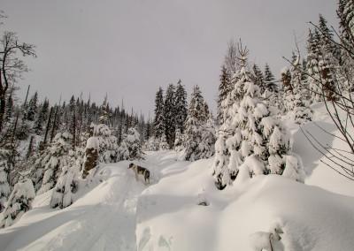 Wandern im Winter auf dem Finsterauer Lusensteig
