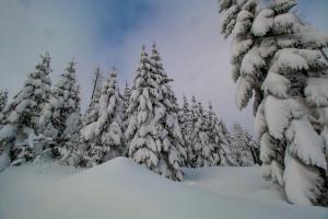 Winterwald in Bayern Bayerischer Wald
