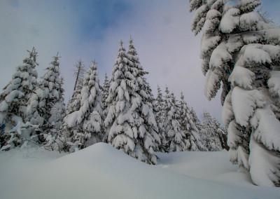 Winterwald Bayerischer Wald