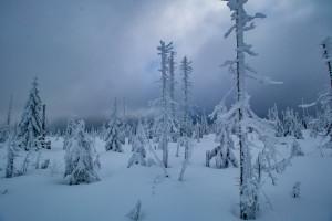 Winter Nationalpark Bayerischer Wald