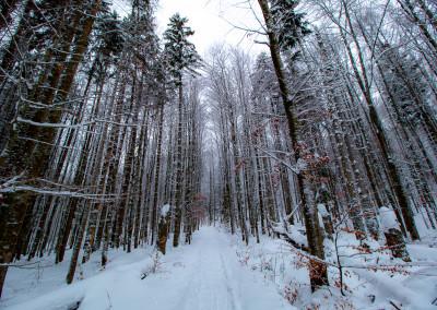 Waldwildnis im Winter Bayerischer Wald Bayern